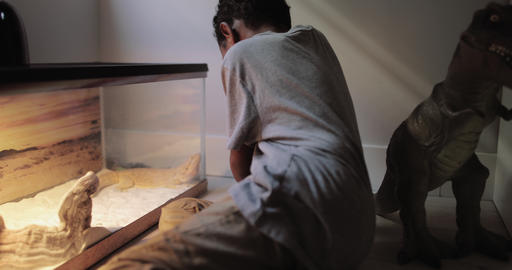 Boy in bedroom playing with iguana Footage