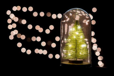 Christmas tree and celebrate lights in snow globe and copy space Fotografía