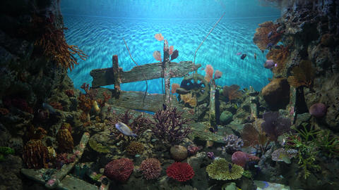 Tropical fish living near colorful corals and boat debris GIF