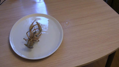 Live cancer on a plate Stock Video Footage