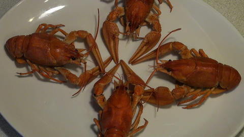 Boiled Crayfish On The Plate stock footage