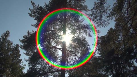 Pine-tree and sun Stock Video Footage