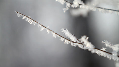 Branch in hoarfrost Stock Video Footage