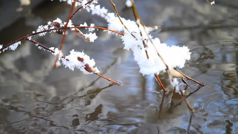 Mountain stream and branch with hoarfrost Stock Video Footage
