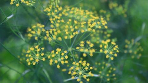 wildflowers in a field Footage