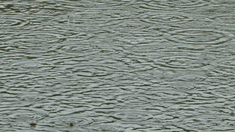 Rainstorm circles on the water Archivo