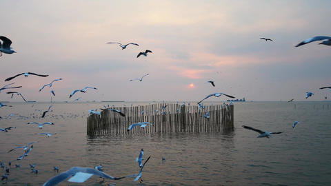 Seagulls at Bangpoo in the evening ビデオ
