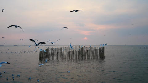 Seagulls at Bangpoo in the evening Stock Video Footage