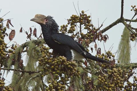 Hornbill, Great Rift Valley, Ethiopia, Africa フォト