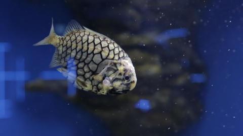 The underwater world of marine life 04 Footage