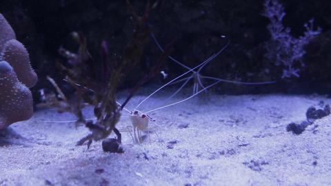 The underwater world of marine life 07 Footage