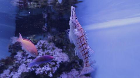 The underwater world of marine life 09 Footage