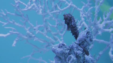 The underwater world of marine life 14 Footage