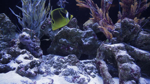 The underwater world of marine life 16 Live Action