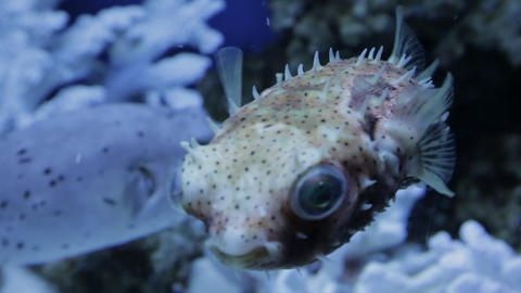 The underwater world of marine life 22 Footage