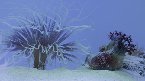 The underwater world of marine life 25 Live Action