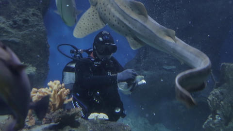 The underwater world of marine life 27 Live Action