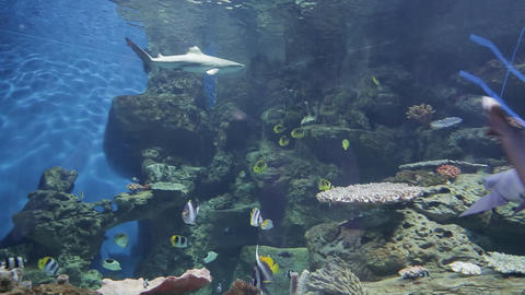 The underwater world of marine life 30 Live Action