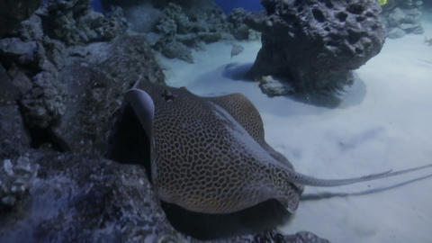 The underwater world of marine life 32 Live Action