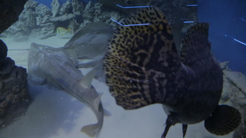 The underwater world of marine life 33 Live Action