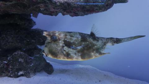 The underwater world of marine life 36 Footage