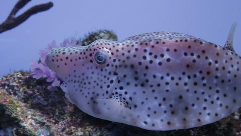The underwater world of marine life 38 Footage