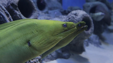 The underwater world of marine life 39 Footage