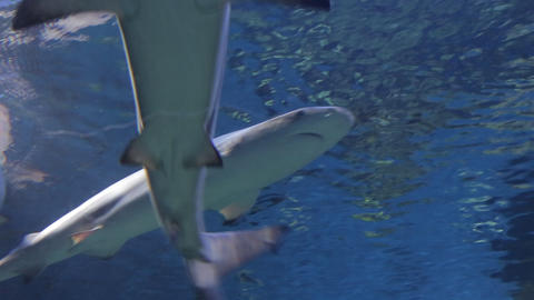 The underwater world of marine life 46 Footage