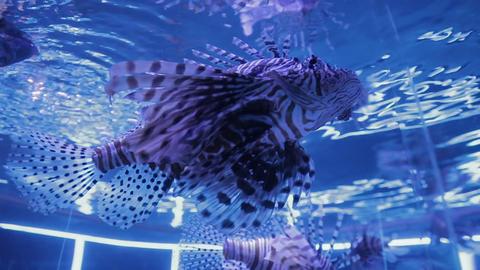 The underwater world of marine life 48 Footage