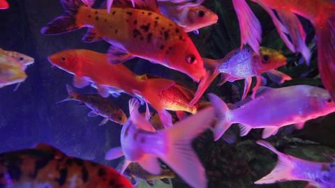 The underwater world of marine life 54 Footage