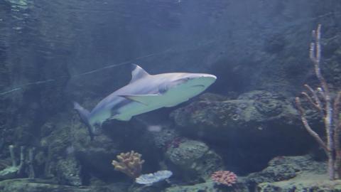 The underwater world of marine life 59 Footage
