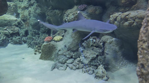 The underwater world of marine life 60 Live Action