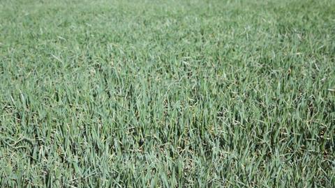 Textured grass background¡ Footage