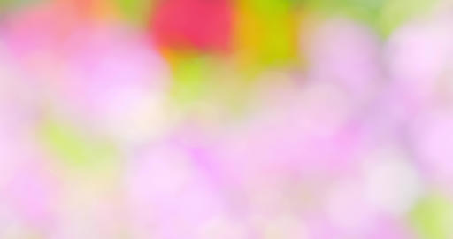 blur with bokeh pink color ライブ動画