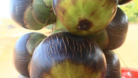 Palmyra Fruit, Cambodia stock footage