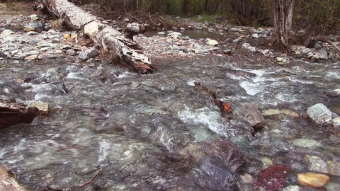 River in the forest Footage