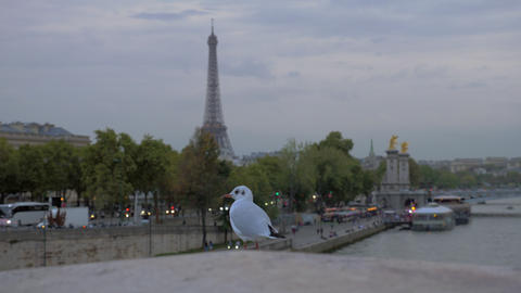 Gull against evening Paris. View with Eiffel Tower and waterfront, France ビデオ