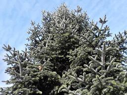 new year tree フォト