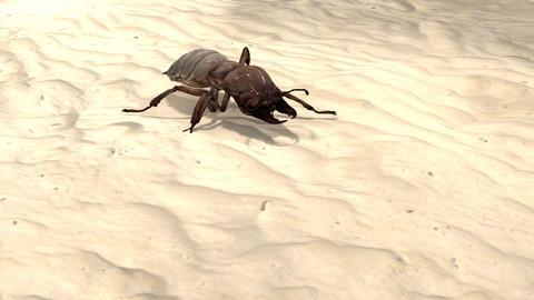 [alt video] Bug Crawling