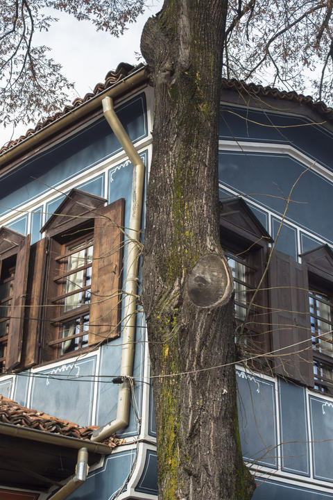 Through the tree - part of a beautiful Renaissance house in Bulgarian style, フォト