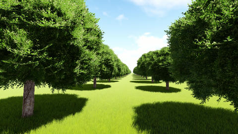 Tree lined entrance to tree Alley Footage