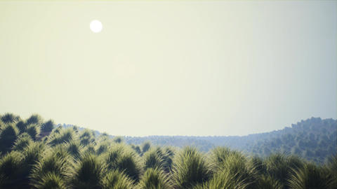 4K Dry Grassfield Arid Landscape in Strong Morning Haze 3D Animation Animation