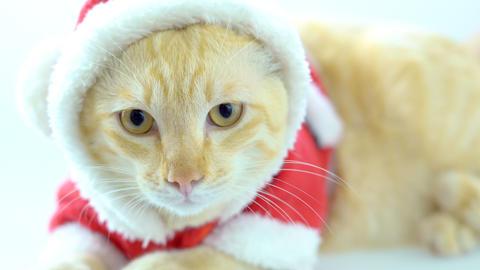 Christmas kitten cat in santa suit Footage