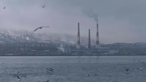 Industrial landscape smoking boiler pipe on sea shore and bird floating in water Archivo