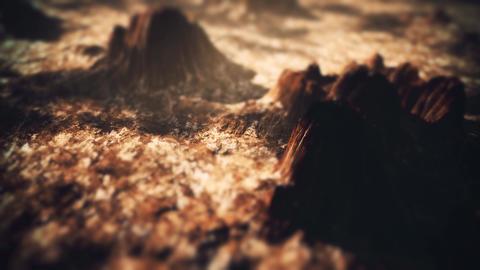 4K Red Rock Desert Cinematic Aerial Tilt Shift 3D Animation Animation