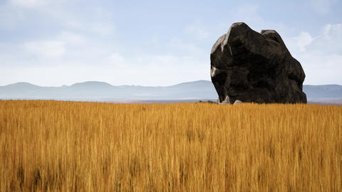 4K Yellow Wheat Field Nature Landscape Cinematic 3D Animation Animation