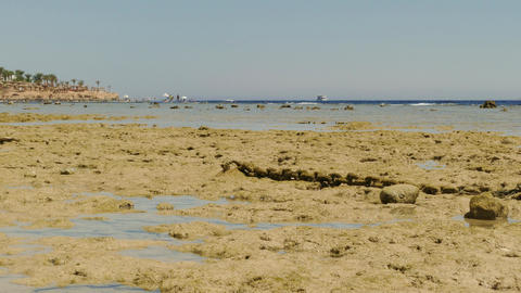 The Shore Of The Red Sea At Low Tide Footage