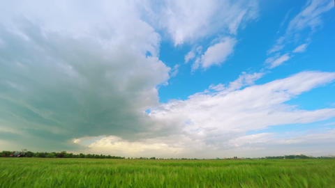 Dark Clouds over a Green Wheat Field Footage