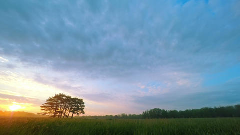 Sunrise in Green Meadow with Six Pines Footage