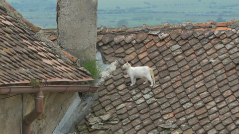 Cat on the Roof Footage